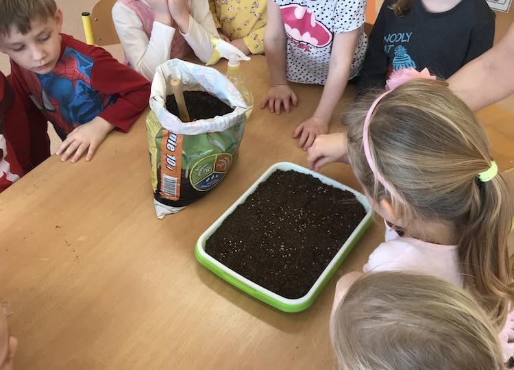 Pěstování microgreens